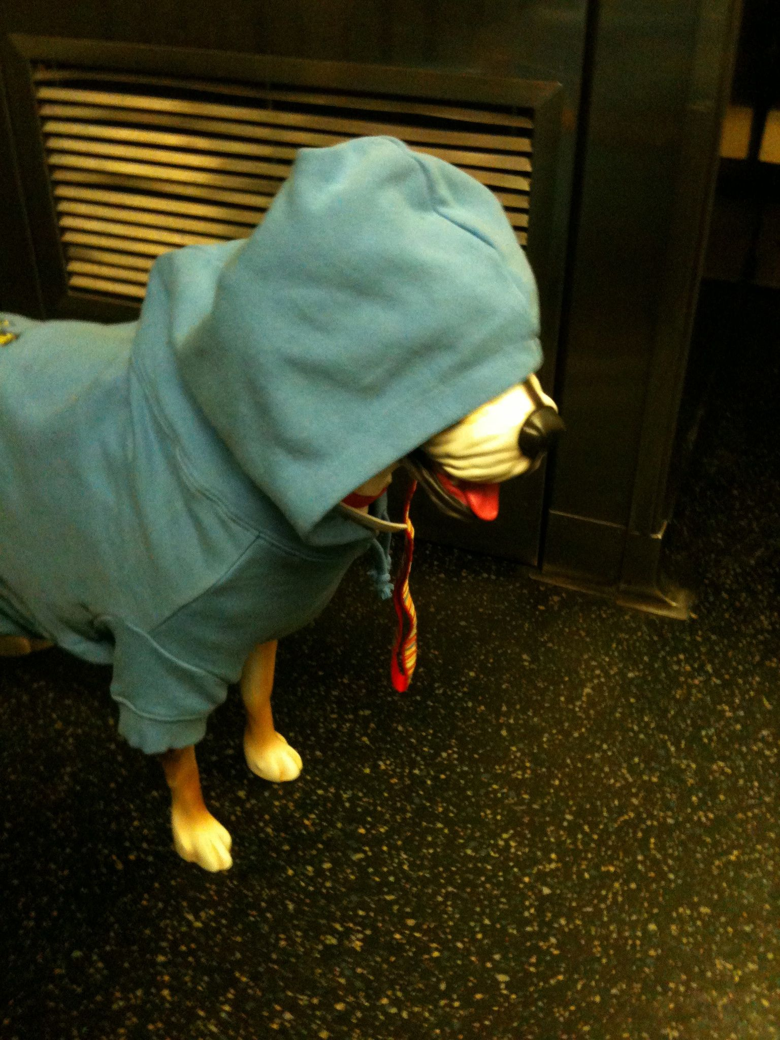 The dog I saw on the subway